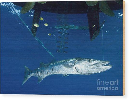 A Great Barracuda Beneath A Boat, Kimbe Wood Print
