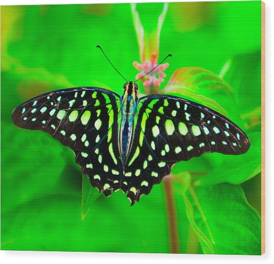 A Green Butterfly Wood Print