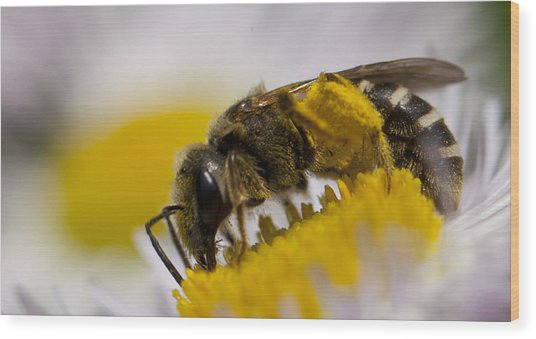 A Honey Bee Wood Print