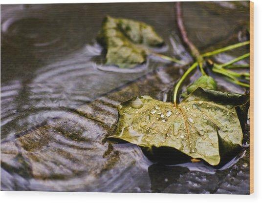 A Leaf In The Rain Wood Print