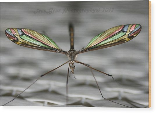 A Little Bling For The Wings Wood Print by Ted Albert