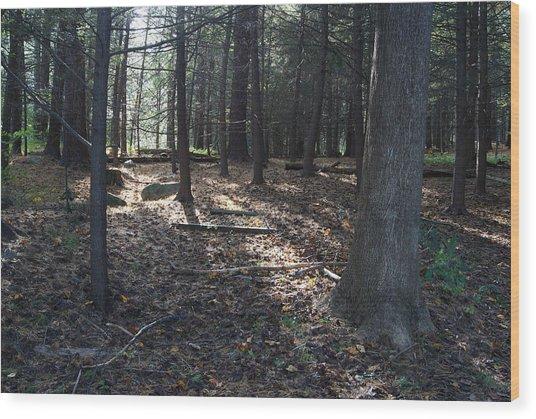 A Nature Walk Wood Print by Margie Avellino