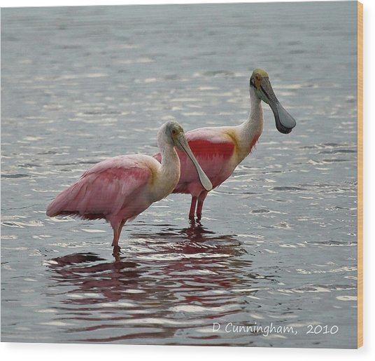 A Pair Of Spoonbills Wood Print