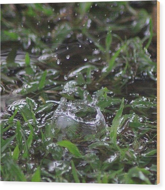 A Rain Drop Hits The Grass In My Wood Print