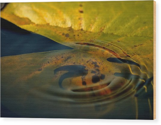 A Ripple In Time Wood Print by Rachel Rodgers