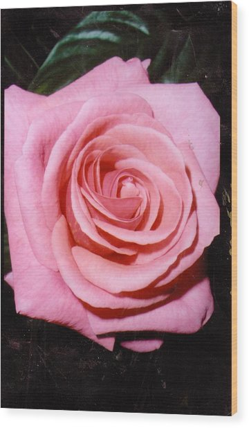 A Rose By Any Other Name Would Still Smell Just As Sweet Wood Print by Anne-Elizabeth Whiteway