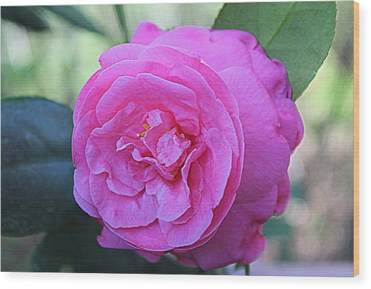 A Rose By Anyother Color Wood Print