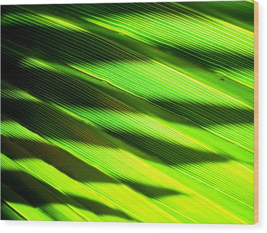 A Shadow Of A Palmfrond On A Palmfrond Wood Print by Catherine Natalia  Roche