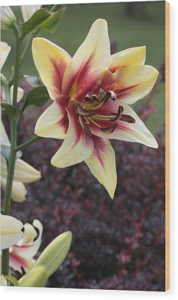 A Single Bloom Wood Print by Mike Lytle