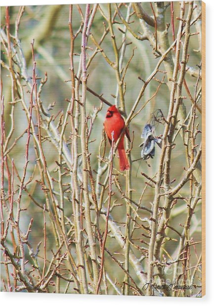 A Spot Of Red Wood Print by Lorraine Louwerse