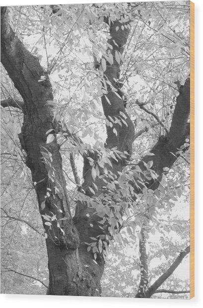 A Tree For All Seasons Wood Print