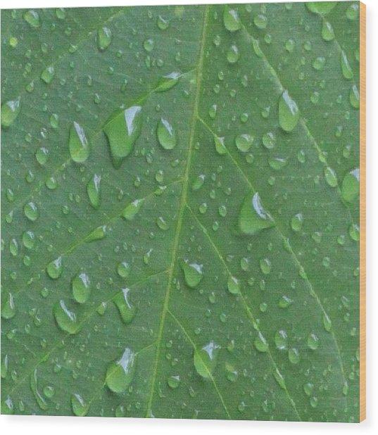 A Tree Leaf Under The Rain, By My Lens Wood Print