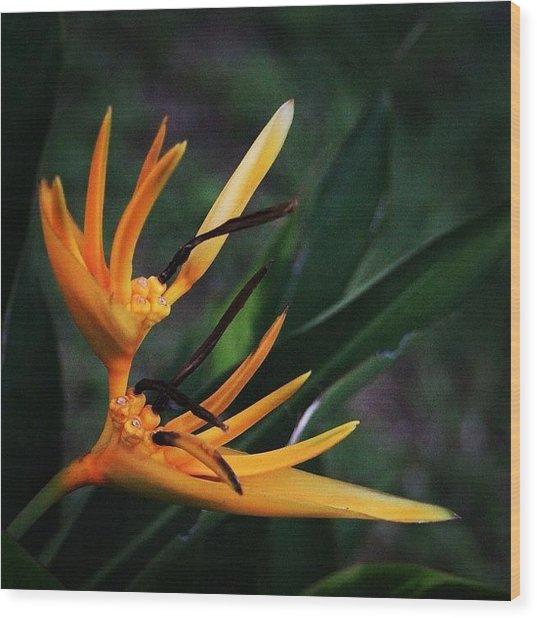 A Tropical Flower, Humming Birds Feed Wood Print