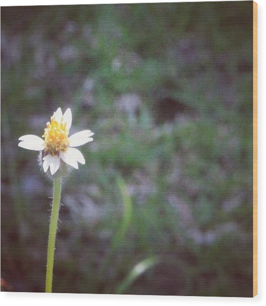 A Wild Flower, Grows Almost Everywhere Wood Print