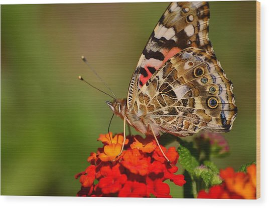A Wing Of Beauty Wood Print