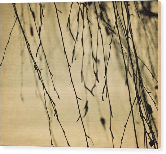 Abstract Branches Wood Print by Amelia Matarazzo