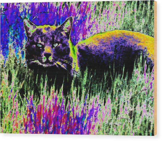 Abstract Of Tabby Wood Print