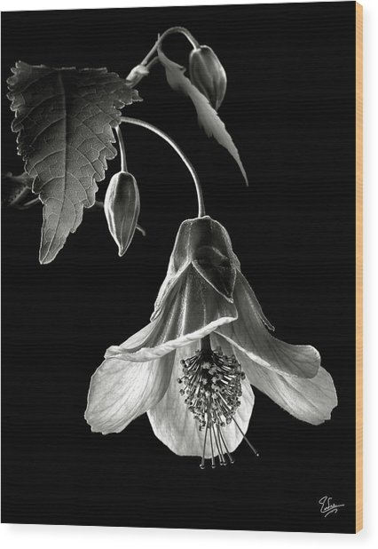 Abutilon In Black And White Wood Print