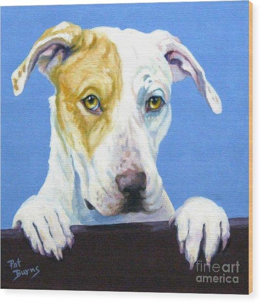 Ac Pup Wood Print by Pat Burns