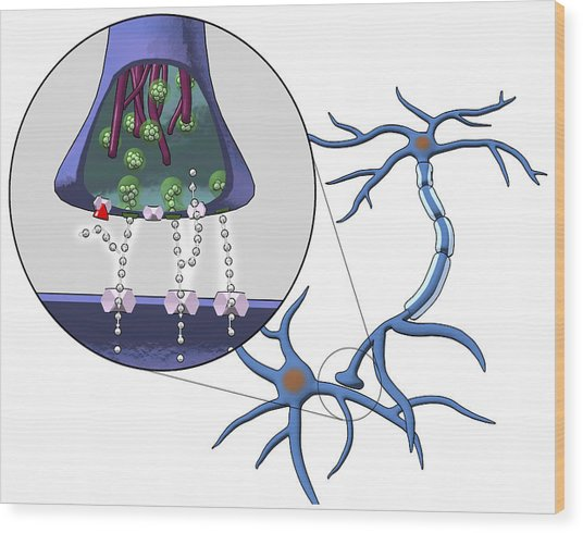 Action Of Serotonin Reuptake Inhibitors Wood Print by Equinox Graphics