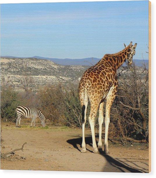 African Safari In Arizona Wood Print by Kim Galluzzo Wozniak