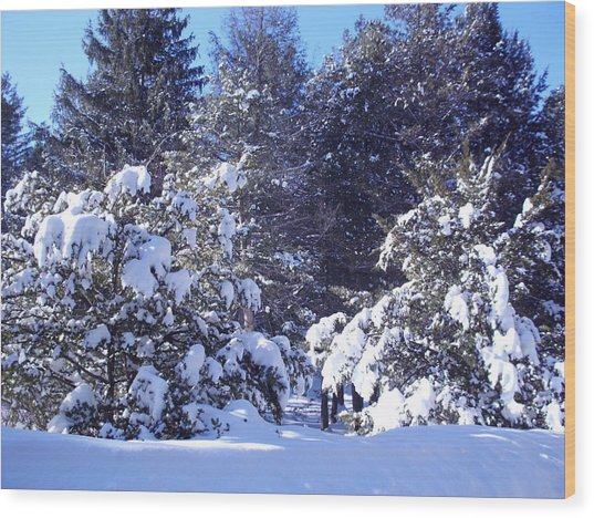 After A New England Snowstorm Wood Print by Lucien Beauley