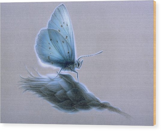 Ainsae Wood Print