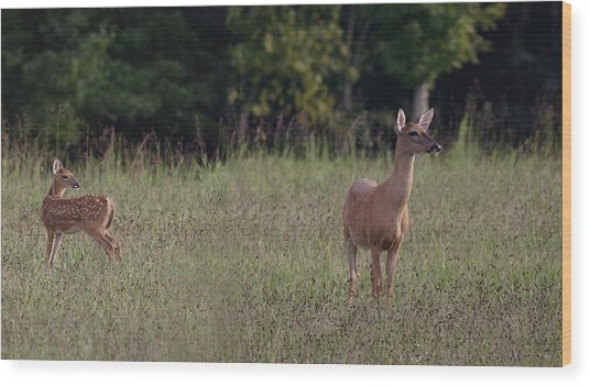 Alert Doe And Fawn Wood Print