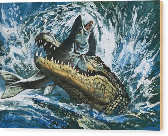 Alligator Eating Fish Wood Print