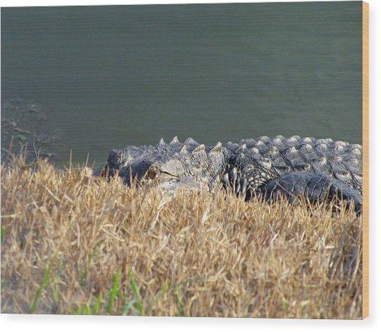 Alligator Eyes Wood Print