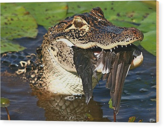 Alligator With Bird Wood Print