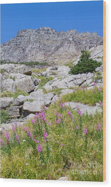 Wood Print featuring the photograph Alpine Abundance 3 by Katie LaSalle-Lowery