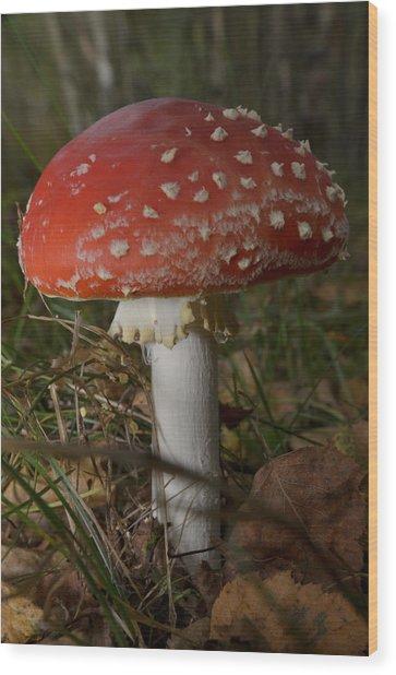 Amanita Muscaria Wood Print