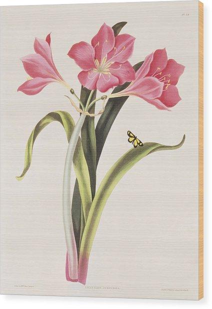 Amaryllis Purpurea Wood Print