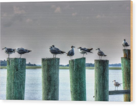 Amelia Island Locals Wood Print by Barry Jones