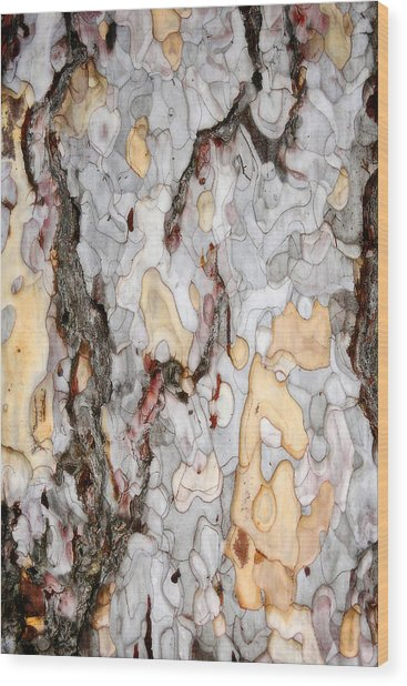 An Bark Of Old Pine Wood Print