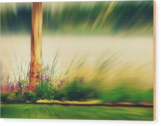 An Explosion Of Beauty Wood Print by Shalini George
