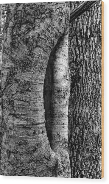 An Open Tree Wood Print