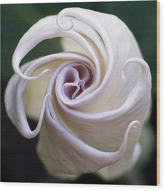 Angel Trumpet Blooms Wood Print