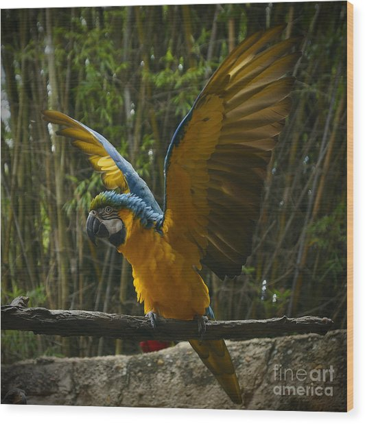 Animal Kingdom - Flights Of Wonder Wood Print