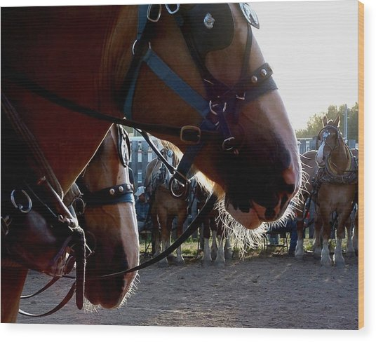 Animals Draft Horse Pull Wood Print