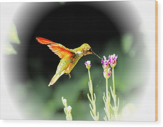 Anna Humming Bird  Wood Print by Paul Baker