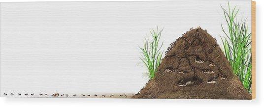Ant Mound, Artwork Wood Print
