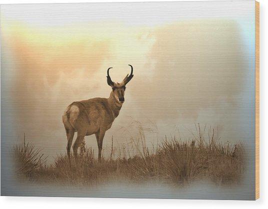 Antelope Wood Print
