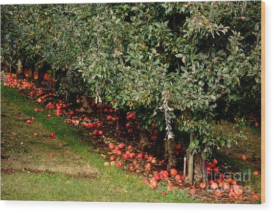 Apple Fall Wood Print