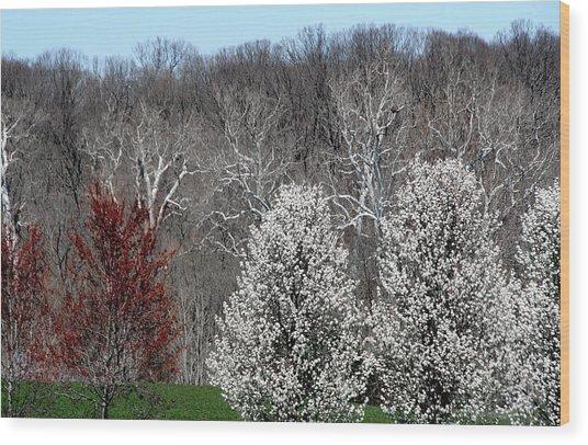 April Beauty Wood Print