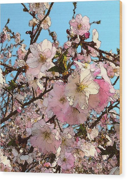 April Morning With Cherry Blossoms Wood Print