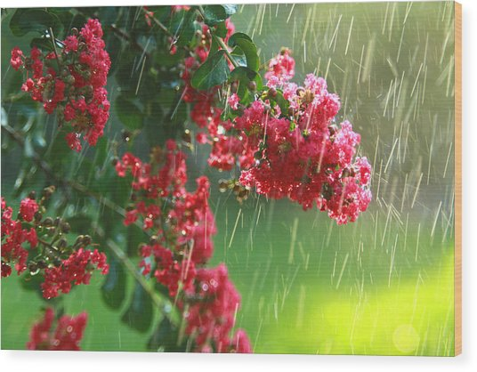 April Showers Wood Print