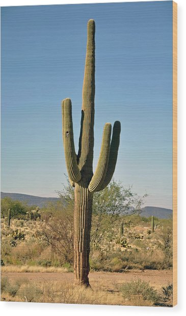 Arizona Cactus Wood Print