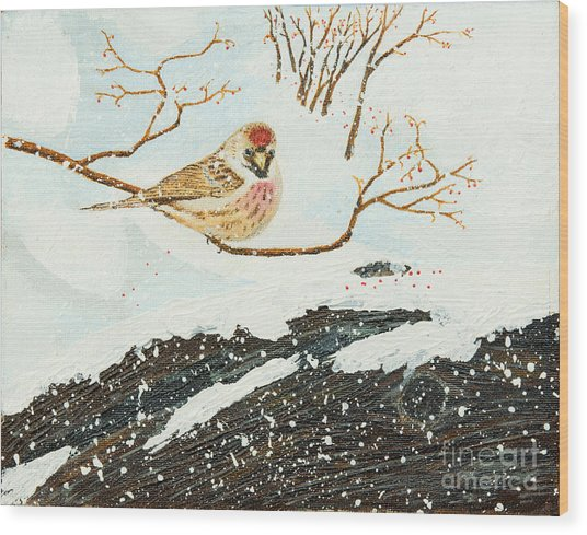 Artic Redpoll Wood Print